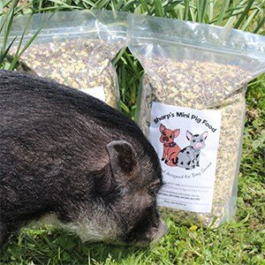 Miniature Pig Feed & Mini Pig Products | Sharps Little Pig Town