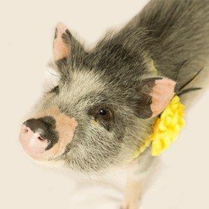 Shop Piggie Products