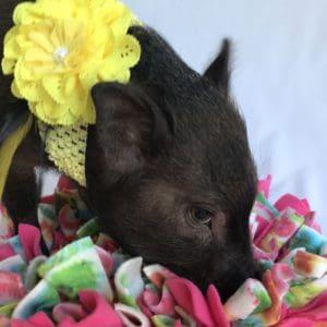 Piggy Bling